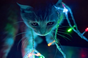 3d-animated-cat-in-winter-christmas-lights-hd-background-christmas-lights-wallpaper